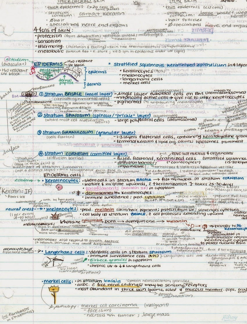 medical school study notes