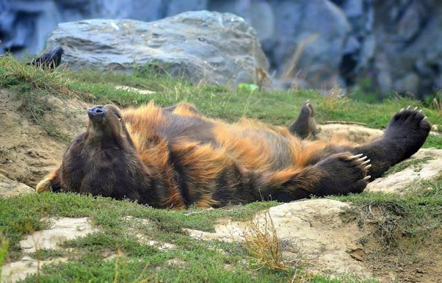 هل تحلم الحيوانات أثناء نومها؟