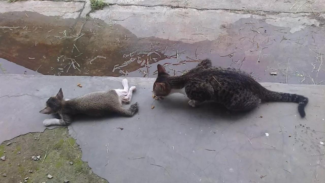 Mengapa Induk Kucing Bisa Tidak Kembali Pada Bayi-Bayinya?
