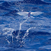 """Flying Fish :  What, Who, Where, When, How And Why """"Flying Fish"""""""