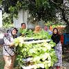 Koramil 07/Kembangan ; Kembangkan Sayur Sawi dengan pupuk organik hidroponik