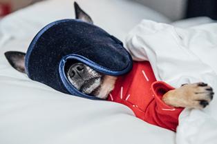 Hoteles.com busca al primer crítico canino del mundo