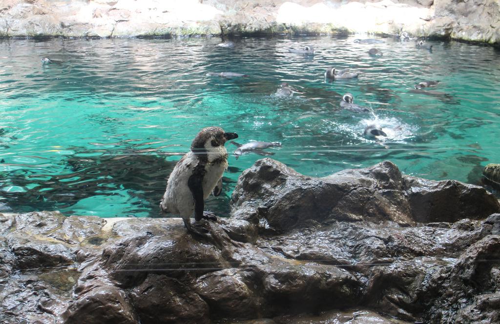 Lifestyle | Loro Parque, Tenerife