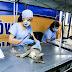 Castramóvel vai esterilizar 600 animais em Cambará