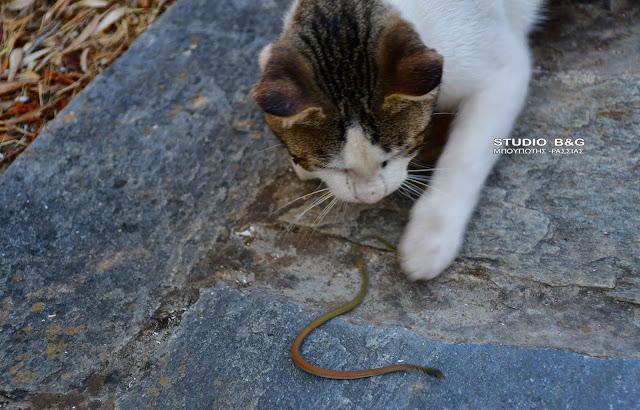Η φωτογραφία της ημέρας: Γάτα εναντίον φιδιού, σημειώσατε ένα