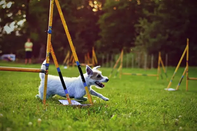 teach your dog to roll over teach your dog to heel teach your dog to speak teach your dog to stay teach your dog to talk teach your dog to come teach your dog to shake teach your dog to sit teach your dog a new trick teach your dog agility
