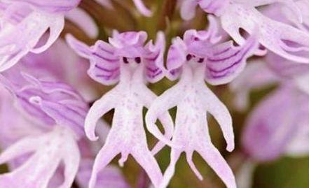 jeanne's boring blog: je hais les orchidées