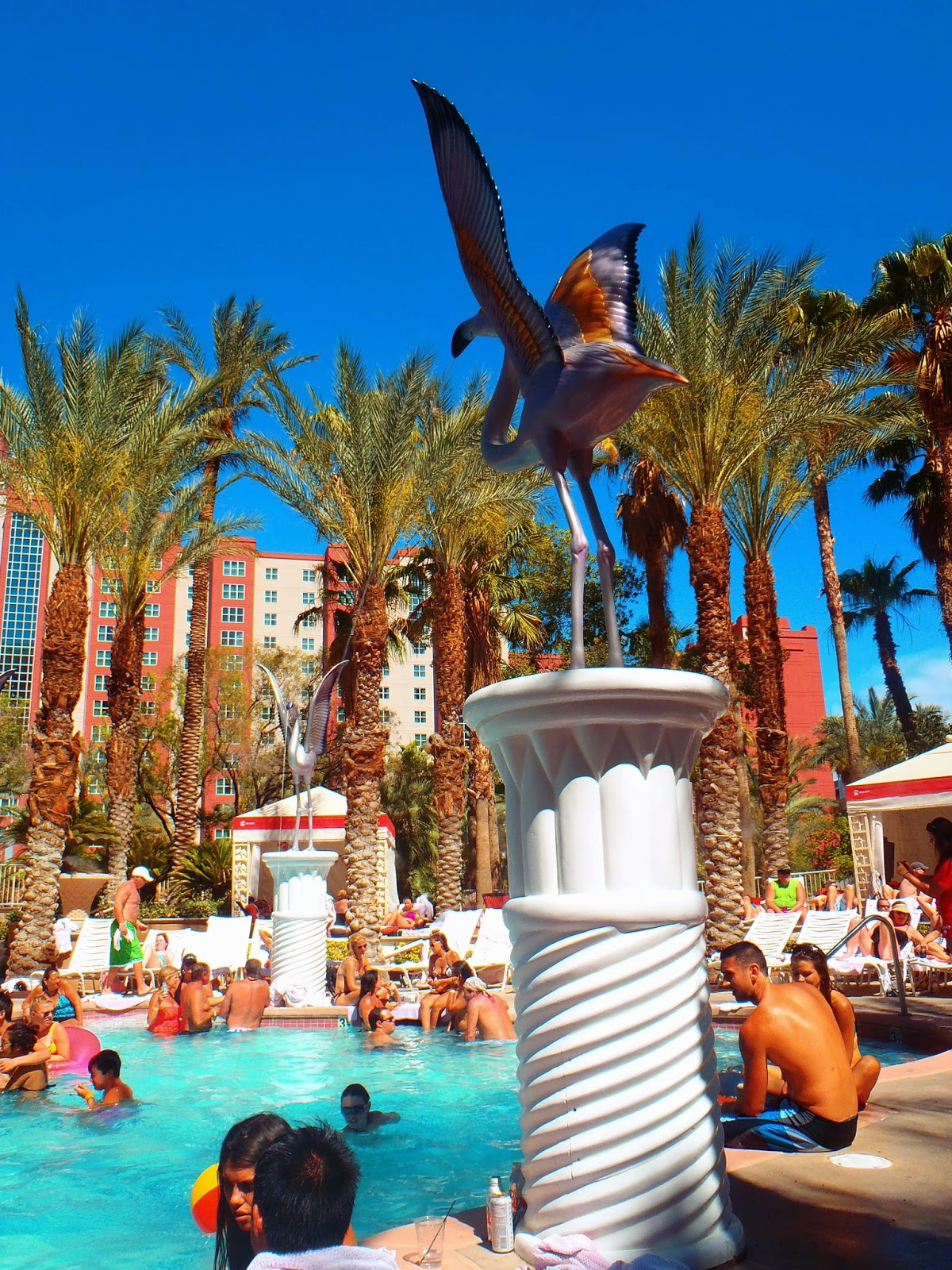 the pool at flamingo hotel