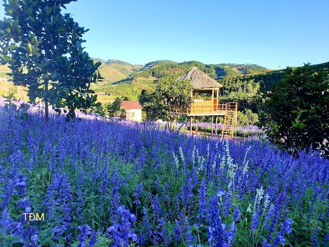 Thung lũng hoa Tà Nung