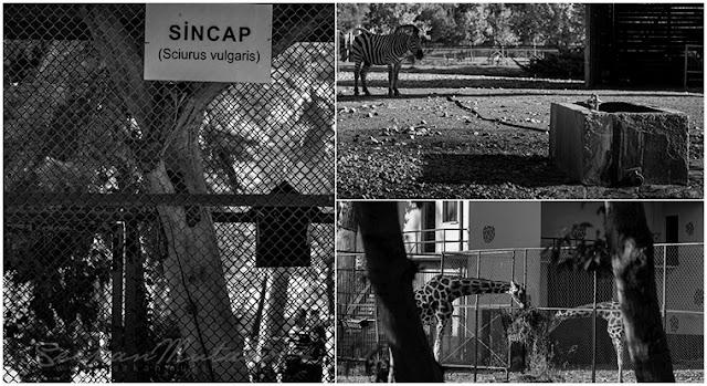 hayvanat bahçeleri gerçeği
