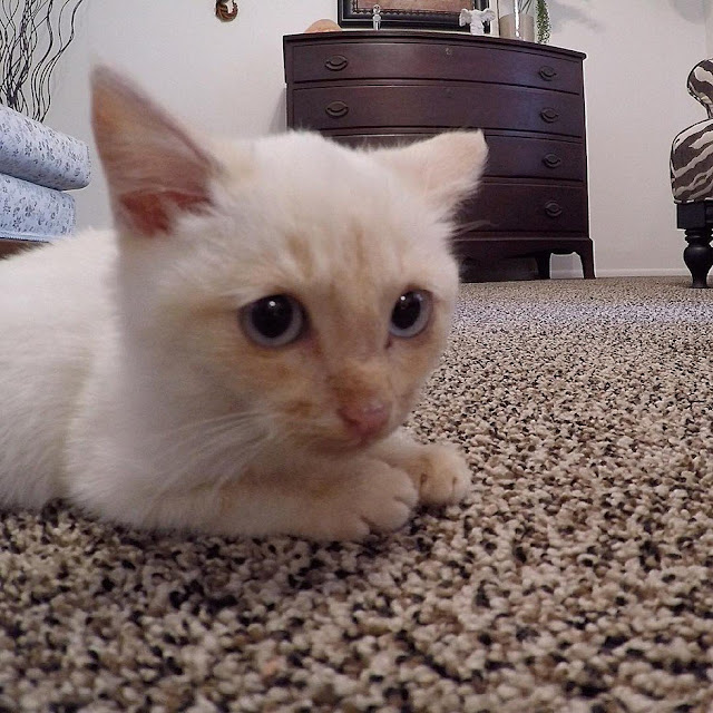 They Spot A 'Lifeless' Kitten Frozen To The Ground. Then They Bring Him Back To Life!