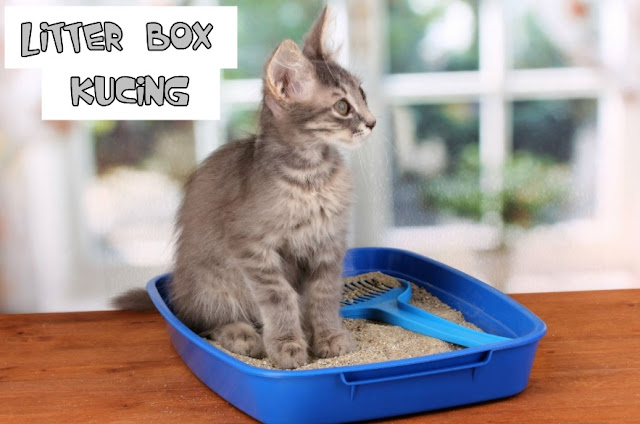 Tips Mengurangi Bau Kotoran Kucing