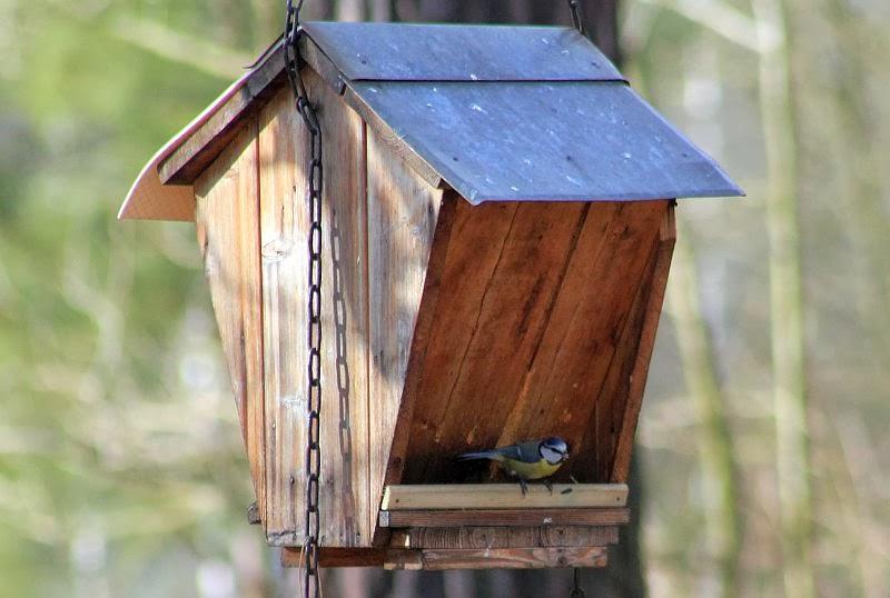 naturwunder  vögel am futterhaus