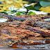 INFO KULINER: Rendang Belut (Baluik): Kuliner Tradisional Kһаѕ Minangkabau