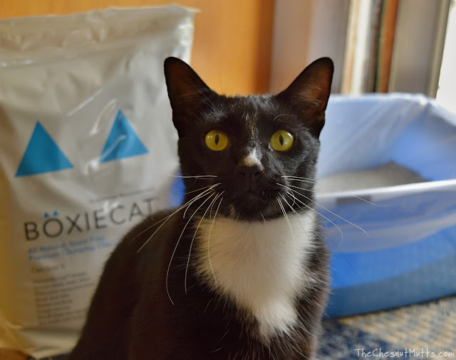 Mini Review: Boxiecat Cat Litter