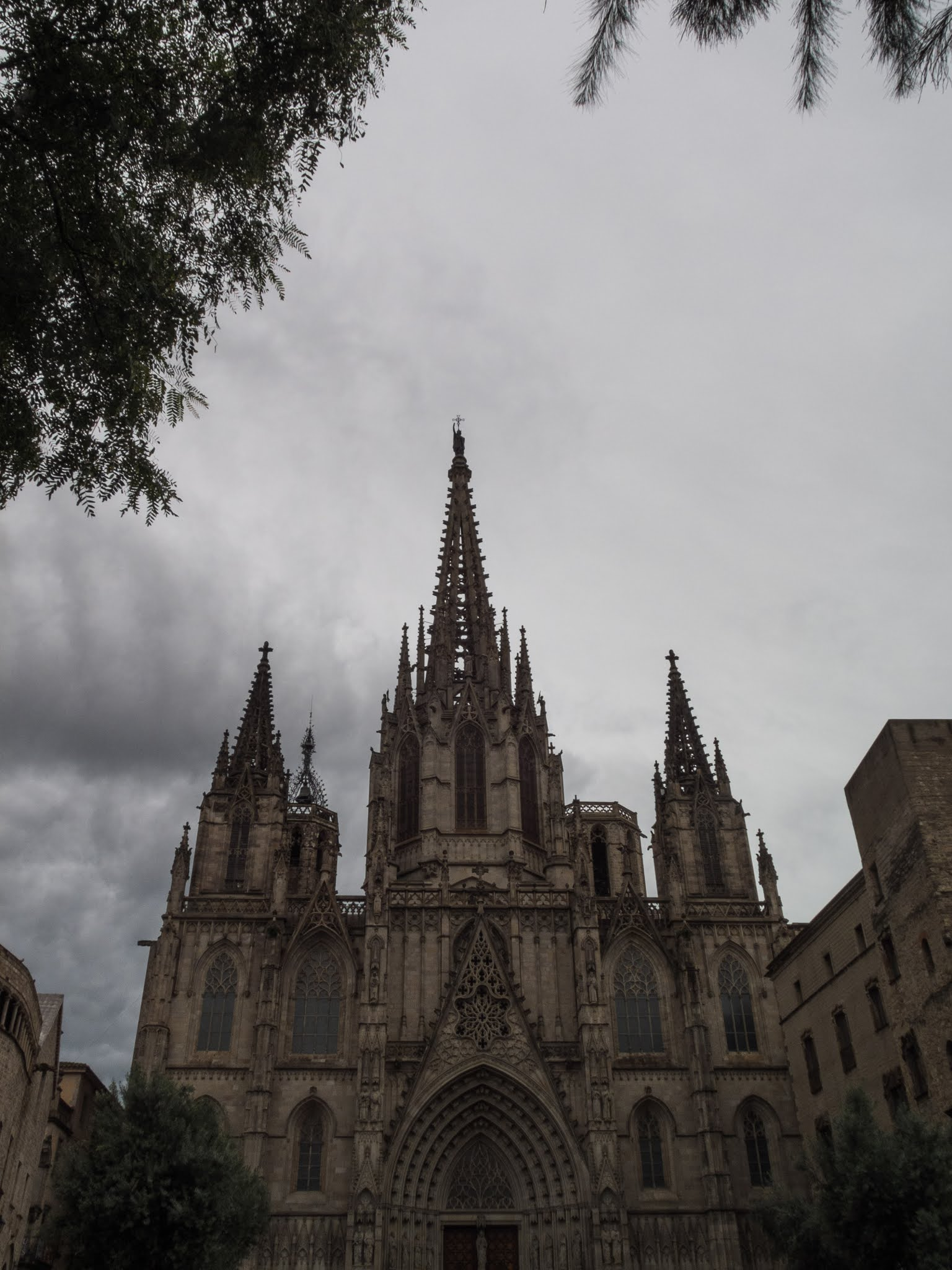 Cathedral of Barcelona captured underneath a pine tree on a rainy day.