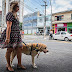 Motorista nega corrida a passageira com cão guia e Procon de SP notifica Uber