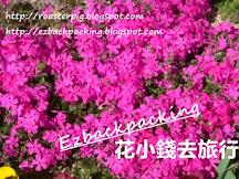 2020日本芝櫻開花情報+芝櫻祭2020(富士芝櫻祭2020時期公佈)