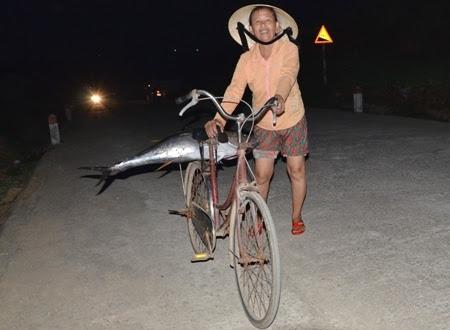 Cụ bà nhanh chân đưa cá ngừ về nhà trong đêm khuya cho kịp tươi sống, đối với gia đình 2 người, con cá này đủ dùng cho cả tuần ở đảo Lý Sơn.