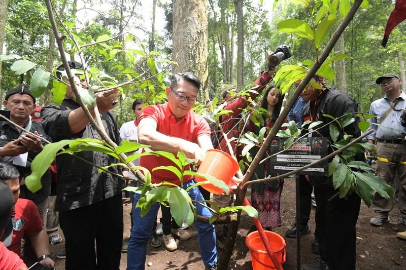 Kang Emil Ikut Menanam 220.022 Bibit di Gerakan Leuweung Padjajaran