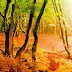Turkey Forest Return Escape