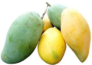 Taksonomi Buah Mangga