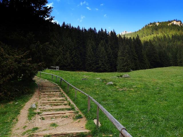 Ścieżka przez Polanę Chochołowską