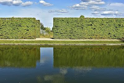 siepe-carpino-alberi-giardino