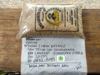 Benih padi yang dibeli   SAKINO Langkat, Sumut.  (Sebelum packing karung).