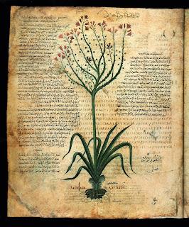 Risultati immagini per raccolta piante officinali medioevo