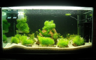 Jenis Moss Aquascape