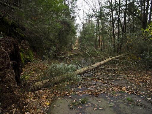 Tree Damage on the rail trail after Hurricane Sandy 2012