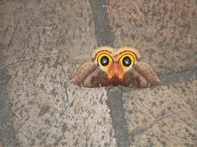 Butterfly -LG