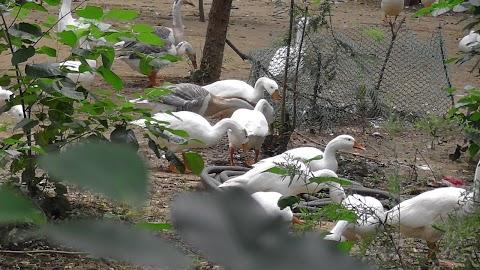 Delhi Jor Bagh Garden Birds 880
