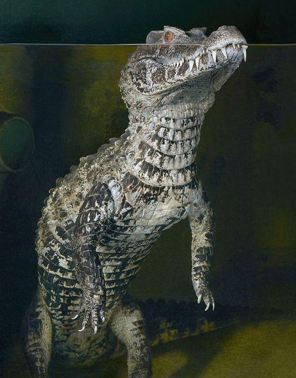 Cá sấu hoang dã