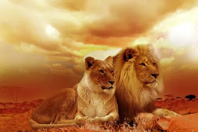 Lion and other Animals