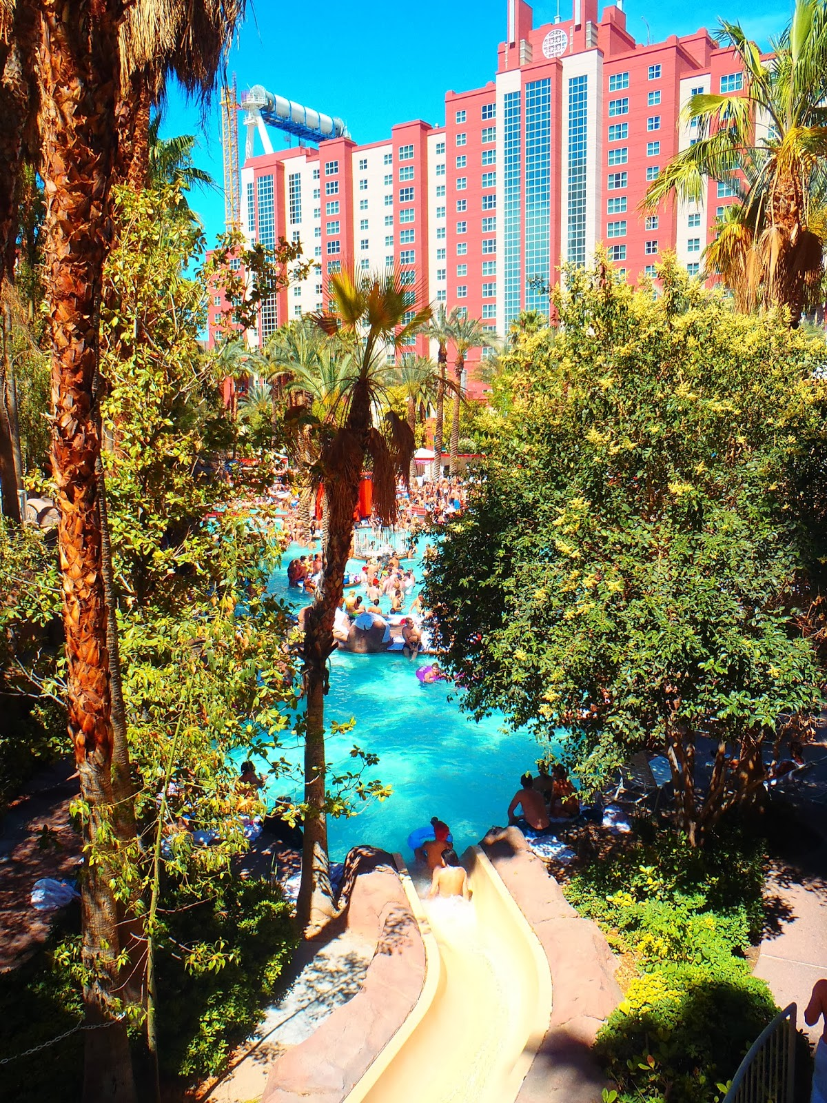 pool in front of flamingo hotel in las vegas