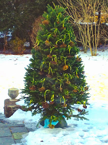 Christmas tree becomes a bird feeder