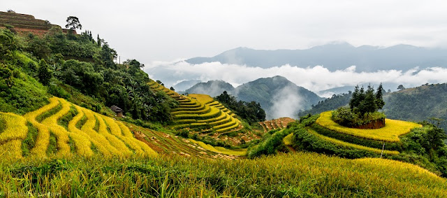 Top Ideal Places To See Amazing Rice Terraced In Northern Vietnam 5