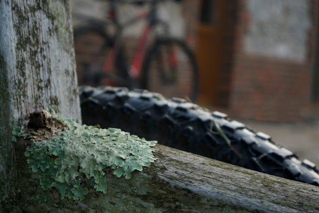 lichen at the churchyard
