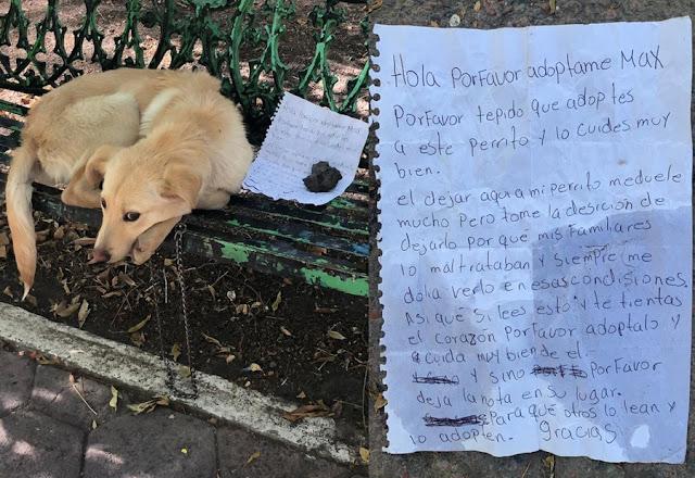 Собаку бросили в парке с грустной запиской от лица ребёнка, который оказался в безвыходном положении