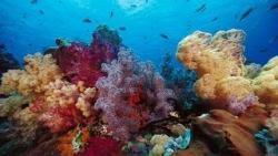 sfondi mare e pesci 16