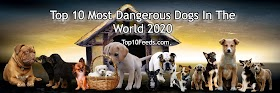 Top 10 Most Dangerous Dogs In The World 2020