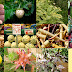 Confira 13 ervas, frutas e legumes em cores bizarras