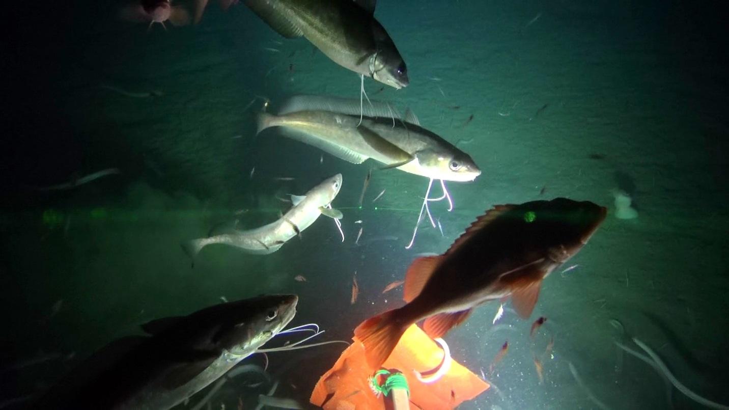 cfer survey blog - lights, camera, action | scientists@sea, Reel Combo