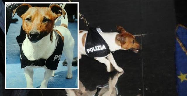 Мафия назначила награду в 370 тыс. за голову служебного пса с супернюхом