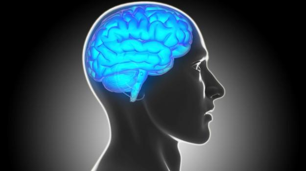 miti cervello