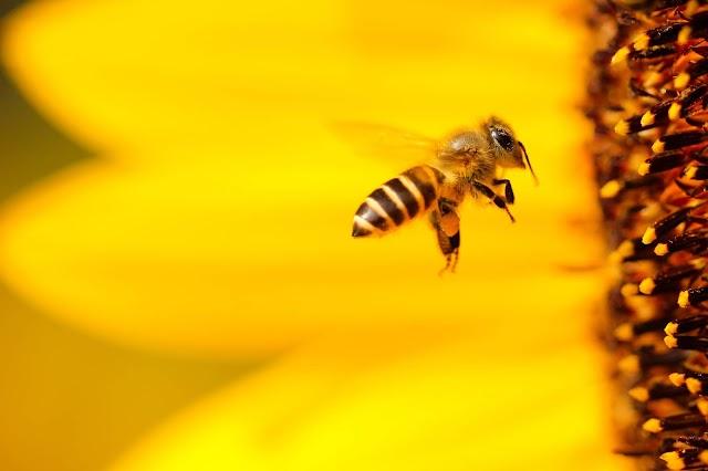 Upozorenje pčelarima - prskanje komaraca