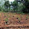 Proyeksi Income dari Kavling Aljami Bee Garden Jasinga