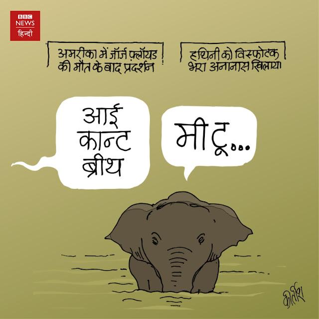 Kerala elephant, cartoon, cartoonist kirtish bhatt, america, racism, human rights